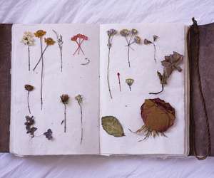 collection, delicate, and hipster image