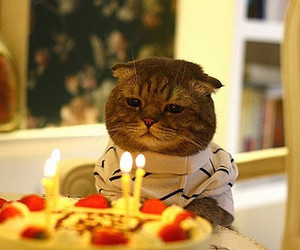 cat, birthday, and cake image