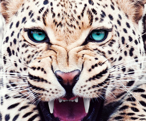 animal, tiger, and leopard image