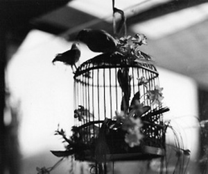 bird, black and white, and cage image