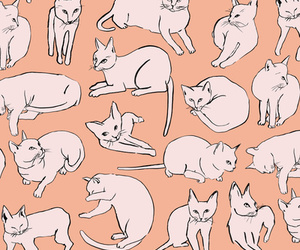 cat and header image