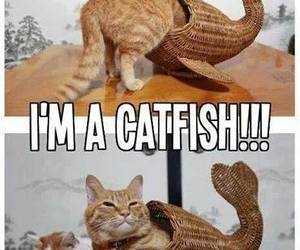 cat, funny, and catfish image