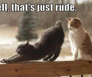 cat, nice, and rude image