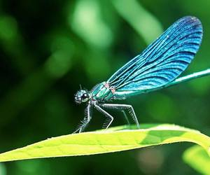 dragonfly, insect, and nature image