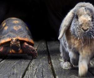 rabbit, race, and turtle image