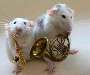 mouse, music, and funny image