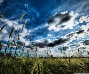 blue sky, field, and nature image