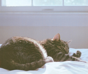 bed, cat, and photography image