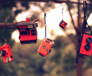 cameras, red, and tree image
