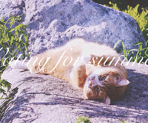 cat, ginger, and summer image