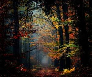 forest, autumn, and trees image
