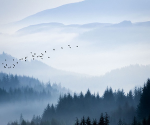 bird, forest, and nature image