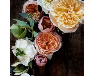 beautiful, flower, and roses image