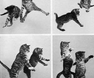 cat, kitten, and black and white image
