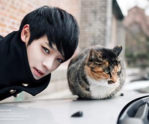 cat, singer, and jung junyoung image