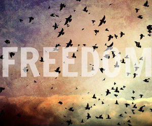 bird, freedom, and sky image