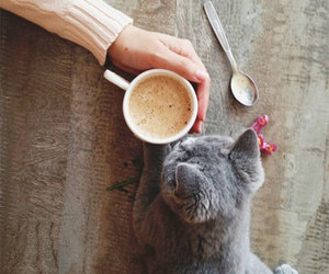 cat, coffee, and kitten image