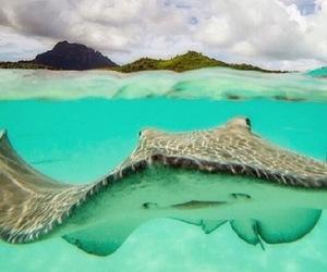 ocean, water, and underwater image