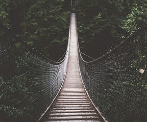 bridge, nature, and forest image