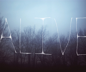 alive, text, and forest image