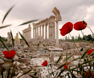 flowers, travel, and ruins image