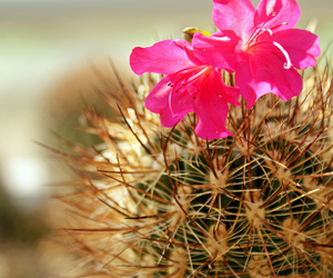 cactus, vacation, and flower image