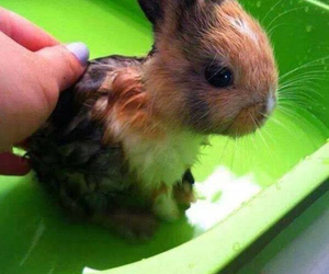rabbit, wet, and sweet image
