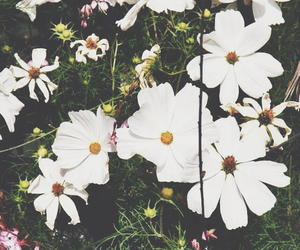 flowers, vintage, and white image