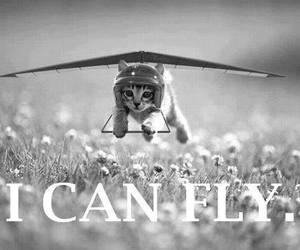 cat, fly, and black and white image
