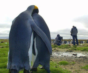 penguin, hug, and animal image
