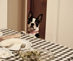 boston terrier, caught, and photography image
