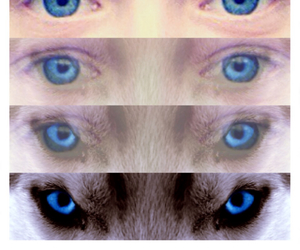 blue, tiger, and eye image