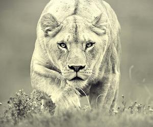 animal, natura, and run image