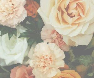 cool, roses, and flowers image