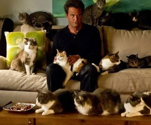 cat, Matthew Perry, and go on image