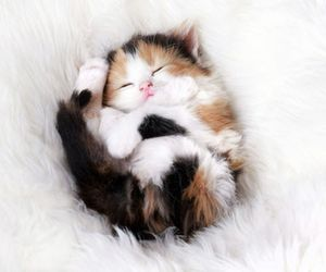 always, animals, and kitten image