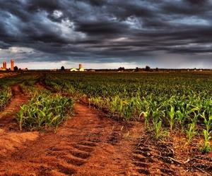 cornfield, fields, and landscapes image