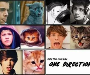 one direction, cat, and liam payne image