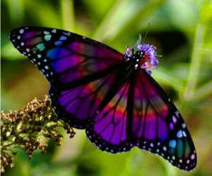 amazing, butterfly, and pretty image