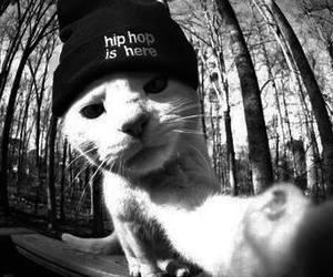 badass, black and white, and cat image