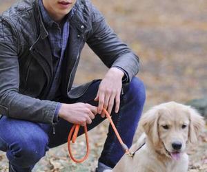 dog, austin butler, and sebastian kydd image