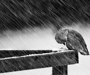 bird, rain, and black and white image