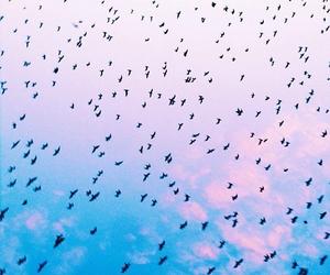 birds, sky, and blue image