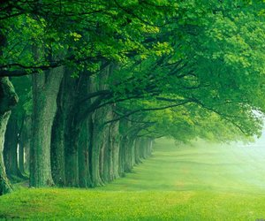 green and trees image