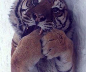 amazing, animals, and aww image