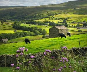flowers, meadows, and yorkshire dales image