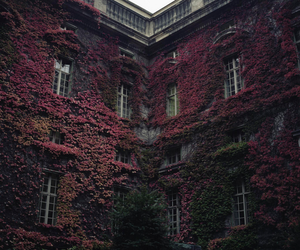 nature, building, and house image