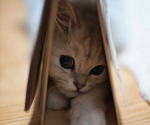 kitty, cute, and so sweet image