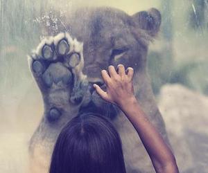 amazing, female, and lion image
