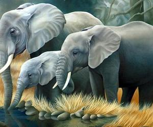 elephant and baby elephant image